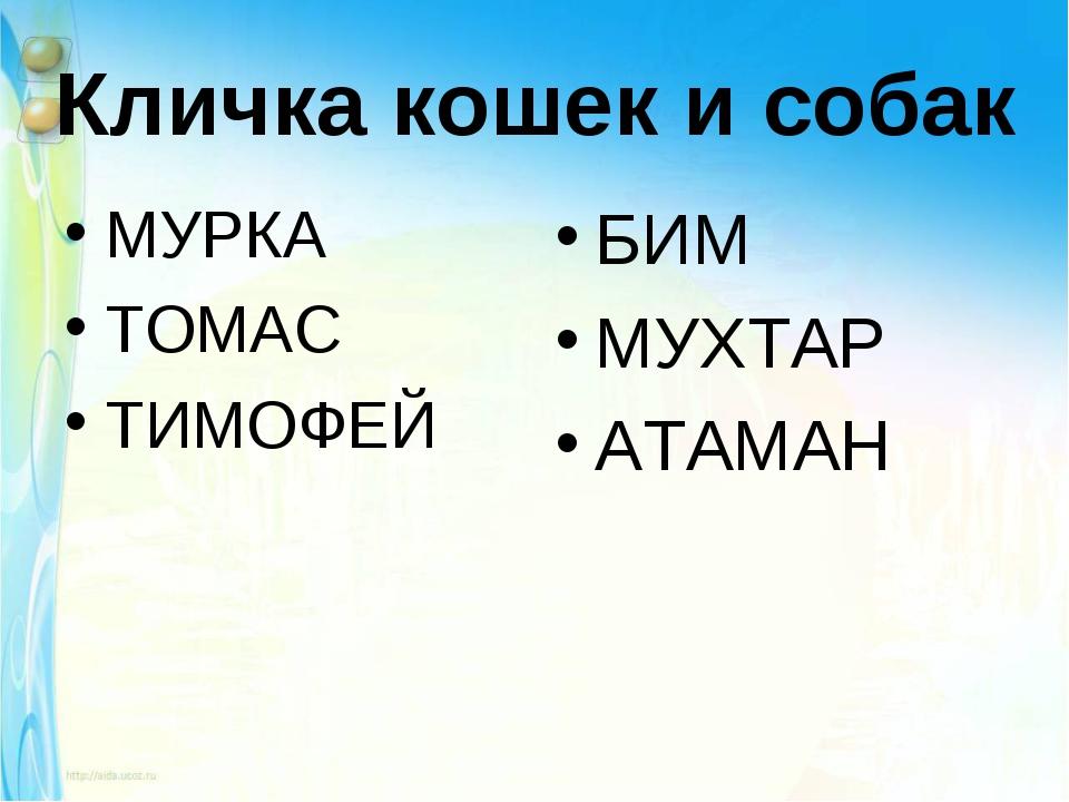 Кличка кошек и собак МУРКА ТОМАС ТИМОФЕЙ БИМ МУХТАР АТАМАН