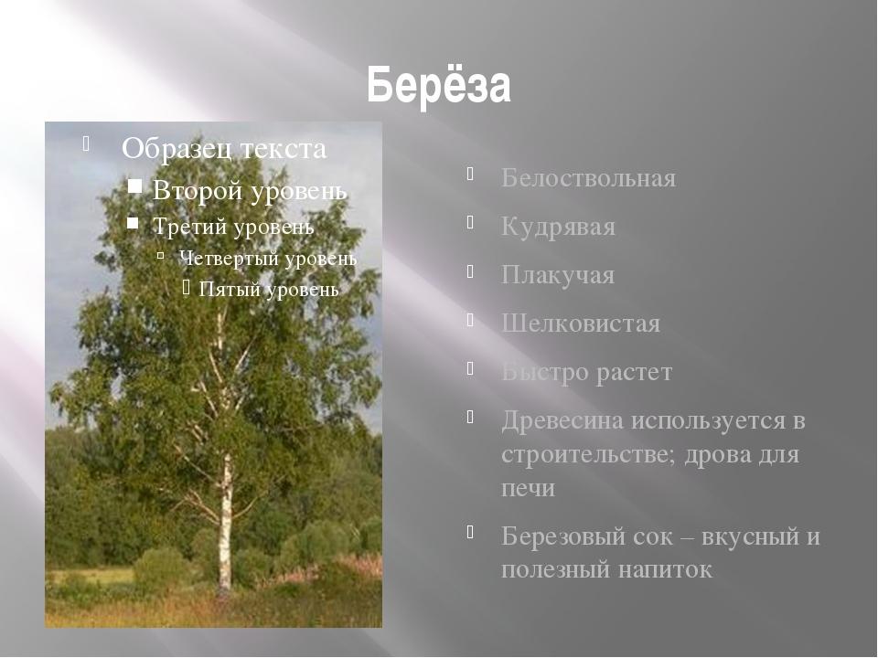 Как сделать паспорт дерева 2 класс фото 190