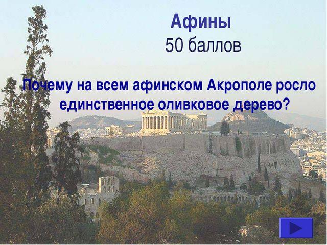 Афины 50 баллов Почему на всем афинском Акрополе росло единственное оливковое...