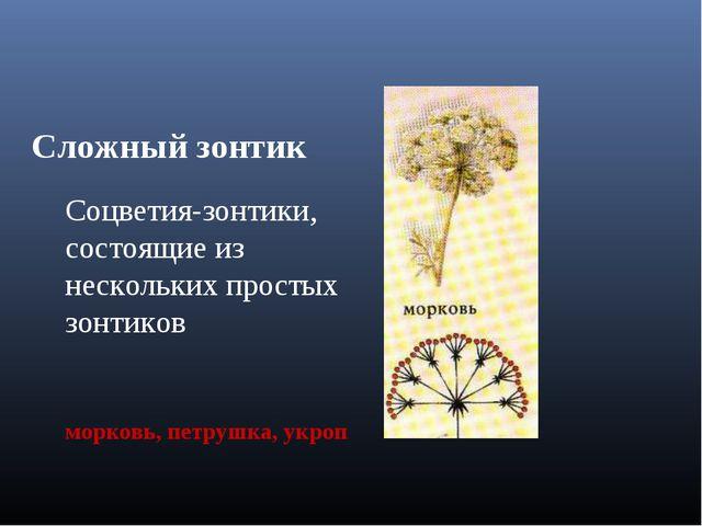 Сложный зонтик Соцветия-зонтики, состоящие из нескольких простых зонтиков мор...