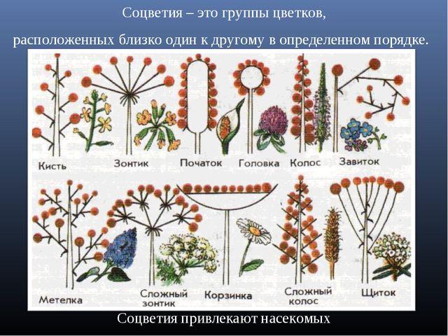 Соцветия – это группы цветков, расположенных близко один к другому в определе...