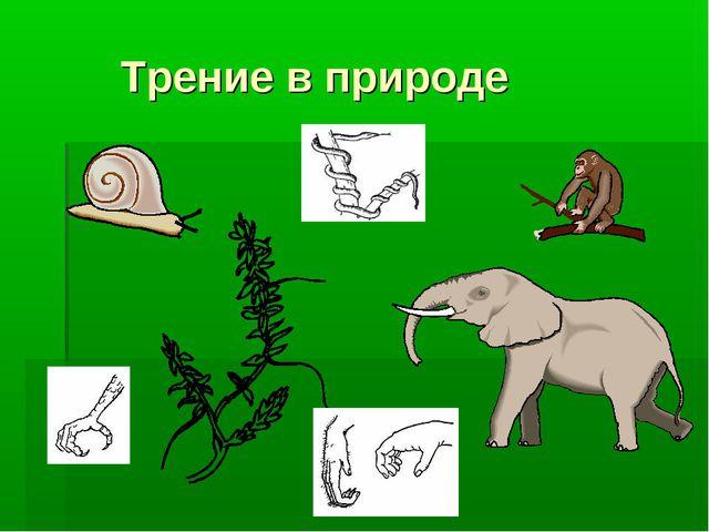 Трение в природе