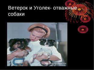 Ветерок и Уголек- отважные собаки
