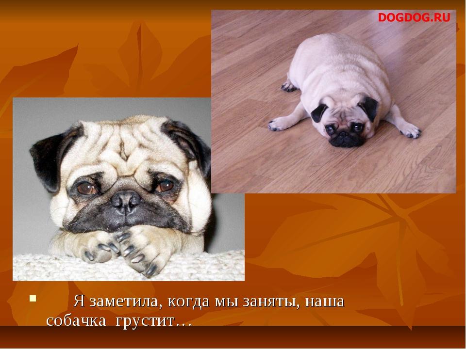 Я заметила, когда мы заняты, наша собачка грустит…
