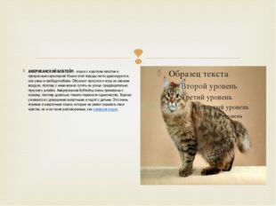 АМЕРИКАНСКИЙ БОБТЕЙЛ- кошка с коротким хвостом и прекрасным характером! Кош