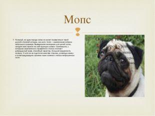Мопс Пожалуй, ни одна порода собак не может похвастаться такой долгой и богат