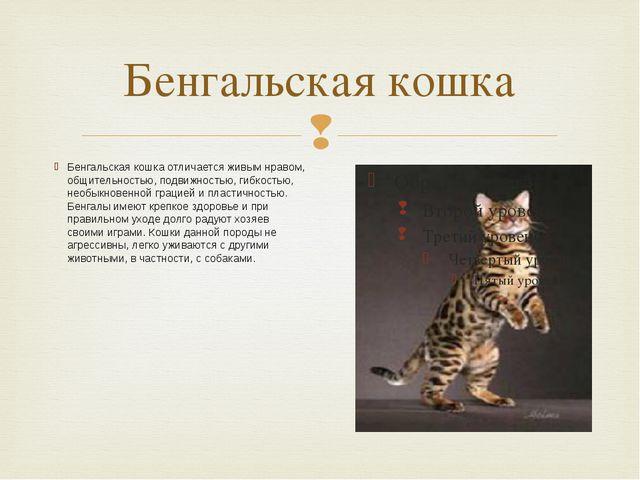 Бенгальская кошка Бенгальская кошка отличается живым нравом, общительностью,...
