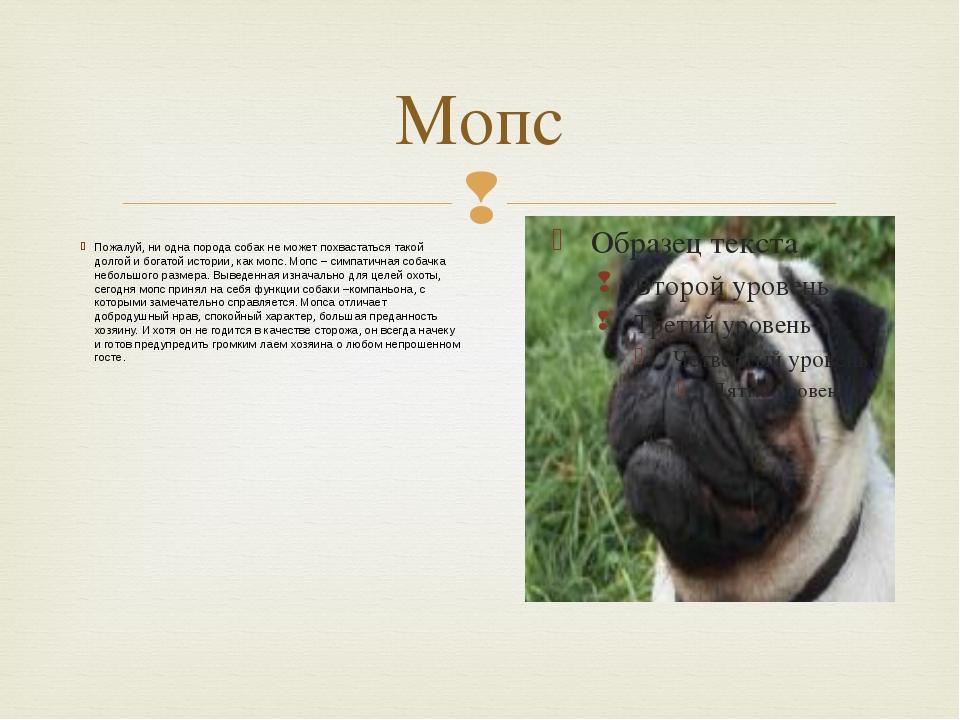 Мопс Пожалуй, ни одна порода собак не может похвастаться такой долгой и богат...