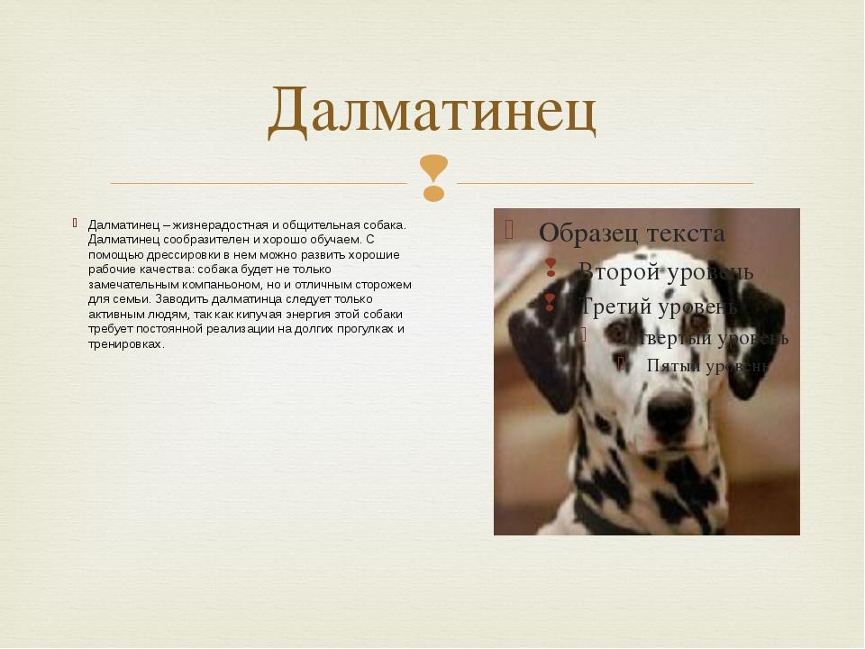 Далматинец Далматинец – жизнерадостная и общительная собака. Далматинец сообр...
