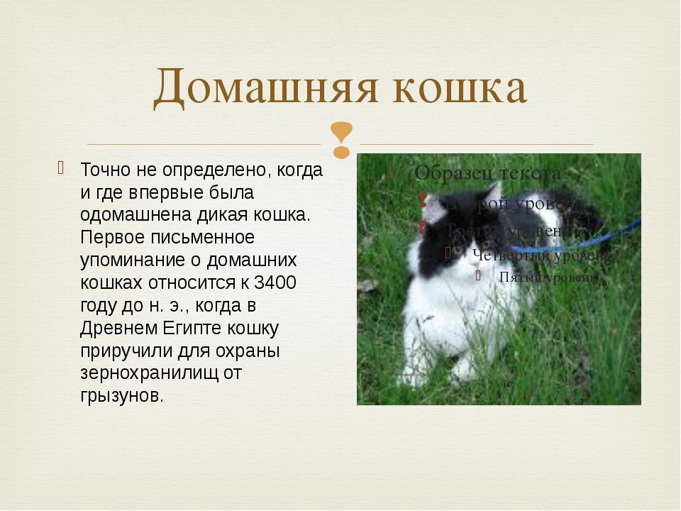 Домашняя кошка Точно не определено, когда и где впервые была одомашнена дикая...