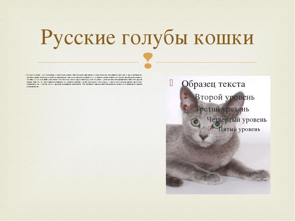 Русские голубы кошки Русские голубые - это элегантные зеленоглазые кошки. Они...