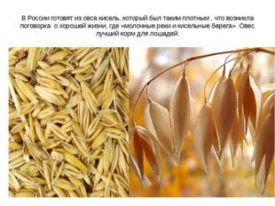 В России готовят из овса кисель, который был таким плотным , что возникла пог