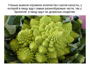 Ученые вывели огромное количество сортов капусты, у которой в пищу идут самые
