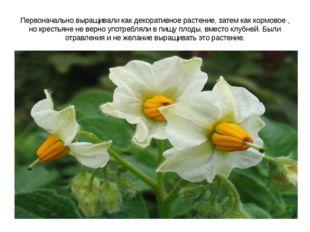 Первоначально выращивали как декоративное растение, затем как кормовое , но к