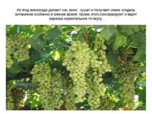 Из ягод винограда делают сок, вино , сушат и получают изюм- кладезь витаминов