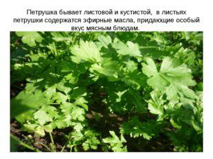 Петрушка бывает листовой и кустистой, в листьях петрушки содержатся эфирные м