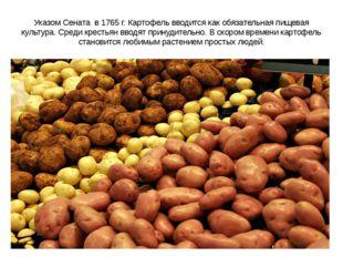 Указом Сената в 1765 г. Картофель вводится как обязательная пищевая культура.
