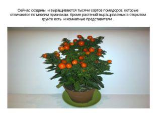 Сейчас созданы и выращиваются тысячи сортов помидоров, которые отличаются по