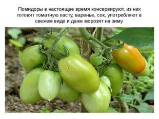 Помидоры в настоящее время консервируют, из них готовят томатную пасту, варен
