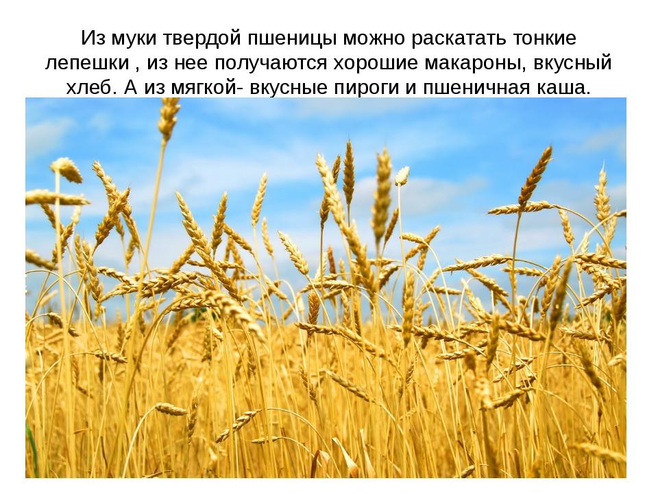 Из муки твердой пшеницы можно раскатать тонкие лепешки , из нее получаются хо...