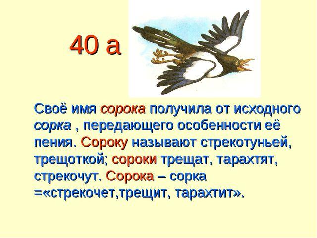 40 а Своё имя сорока получила от исходного сорка , передающего особенности её...