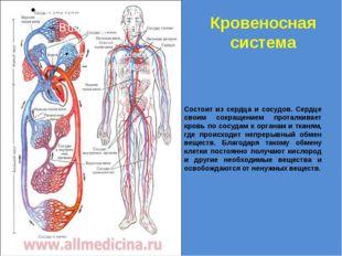 Кровеносная система Состоит из сердца и сосудов. Сердце своим сокращением про