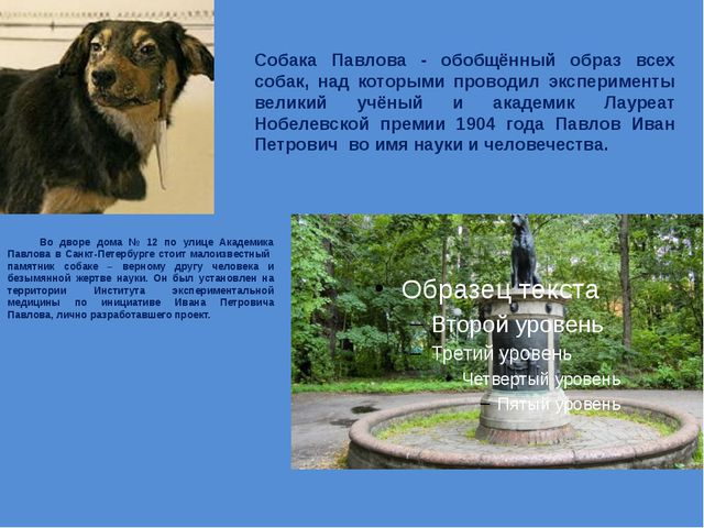 Собака Павлова - обобщённый образ всех собак, над которыми проводил экспериме...