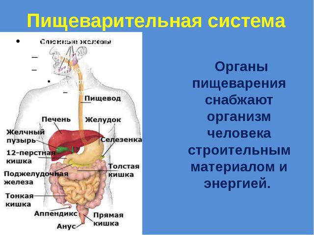 Пищеварительная система Органы пищеварения снабжают организм человека строите...