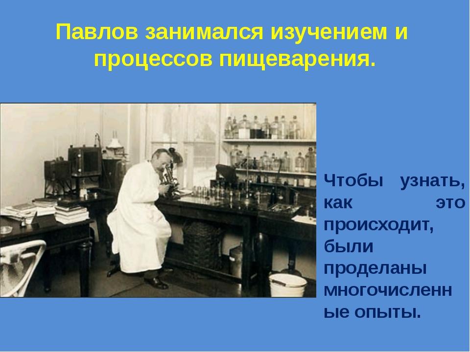 Павлов занимался изучением и процессов пищеварения. Чтобы узнать, как это про...