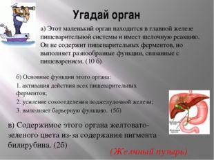Угадай орган а) Этот маленький орган находится в главной железе пищеварительн