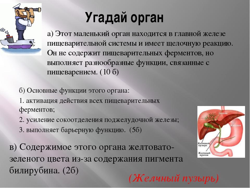 Угадай орган а) Этот маленький орган находится в главной железе пищеварительн...
