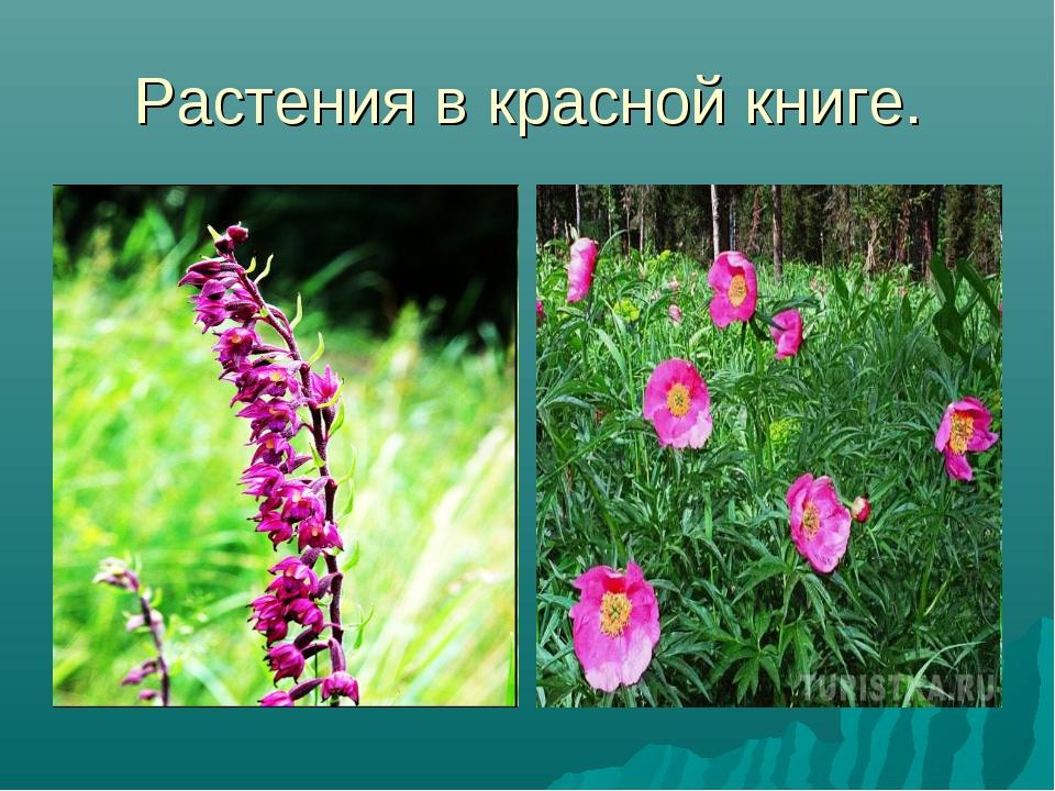 Растения в красной книге.