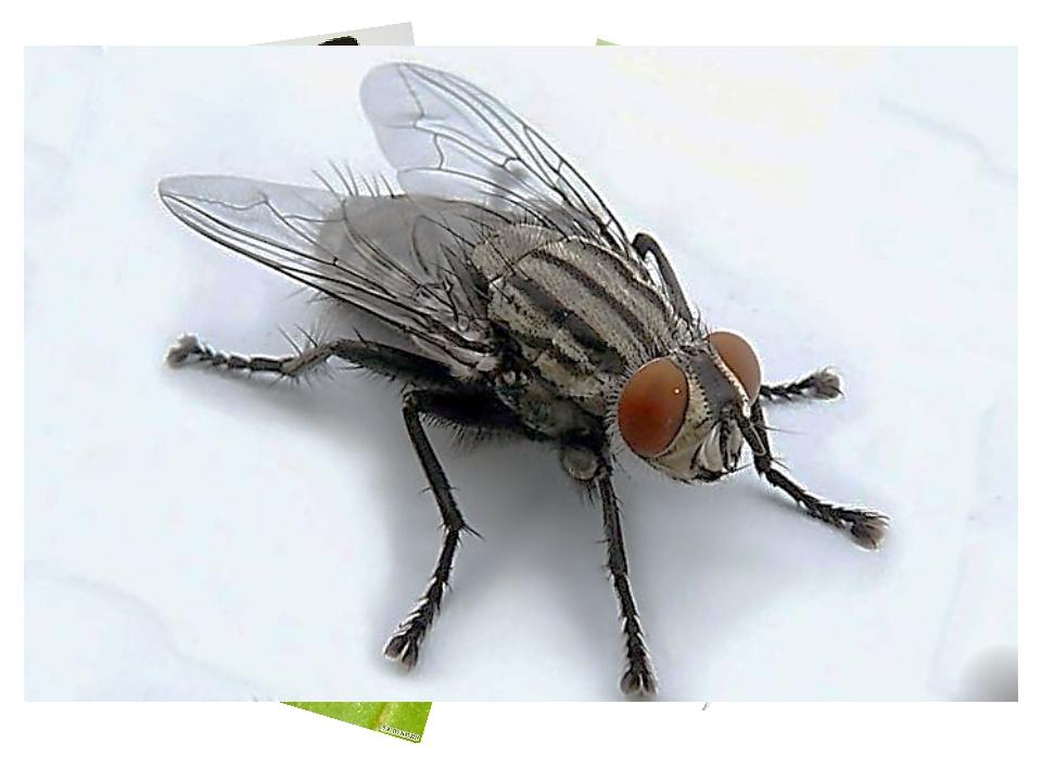 Какие насекомые на изображении