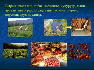 Выращивают чай, табак, зерновые, кукурузу, дыни , арбузы, виноград. В садах ц