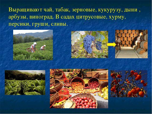 Выращивают чай, табак, зерновые, кукурузу, дыни , арбузы, виноград. В садах ц...