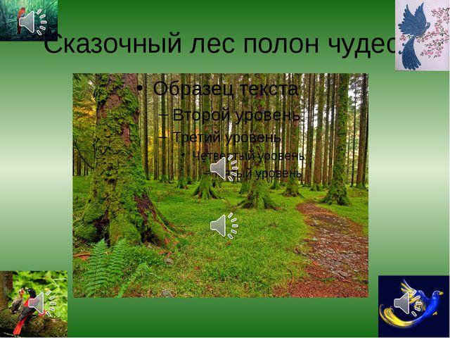Сказочный лес полон чудес!