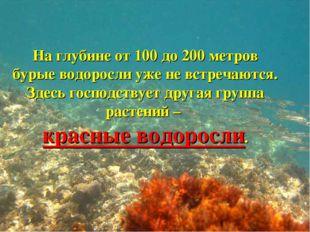 На глубине от 100 до 200 метров бурые водоросли уже не встречаются. Здесь гос