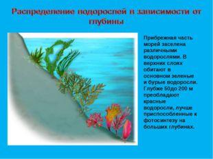 Прибрежная часть морей заселена различными водорослями. В верхних слоях обита