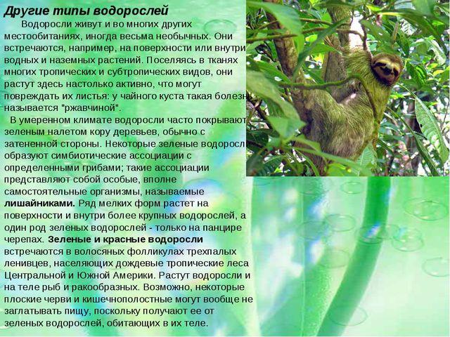 Другие типы водорослей Водоросли живут и во многих других местообитаниях, ино...