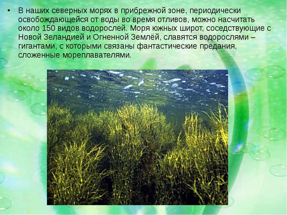 В наших северных морях в прибрежной зоне, периодически освобождающейся от вод...