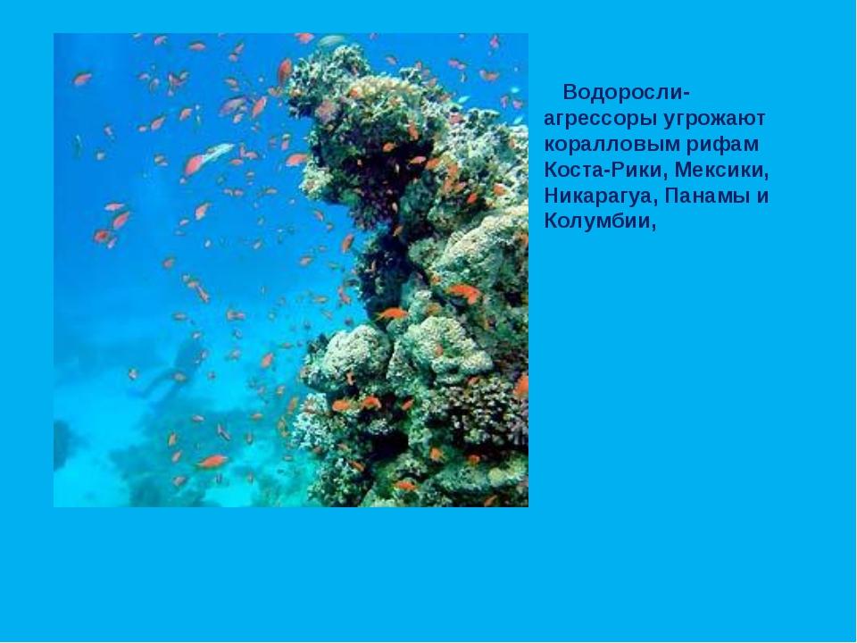 Водоросли-агрессоры угрожают коралловым рифам Коста-Рики, Мексики, Никарагуа...