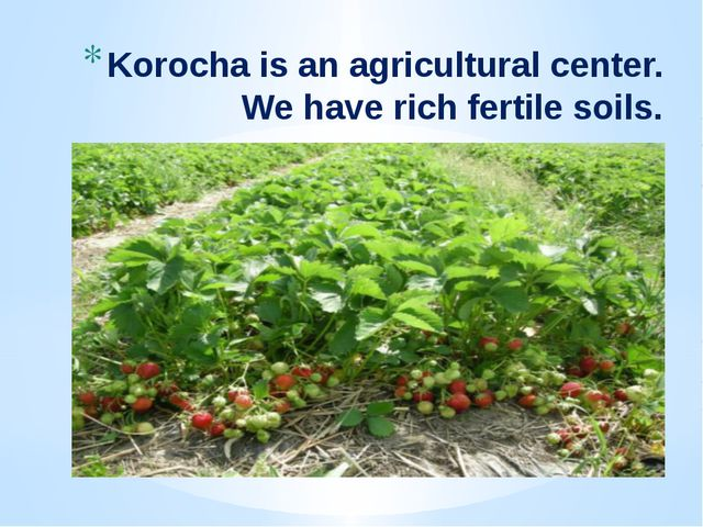 Korocha is an agricultural center. We have rich fertile soils.