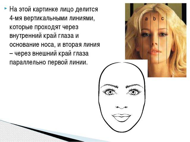 На этой картинке лицо делится 4-мя вертикальными линиями, которые проходят че...