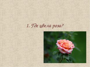 1. Где цвела роза?