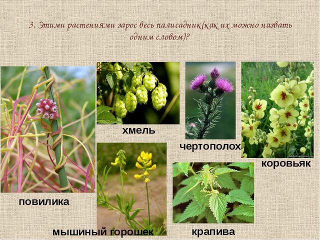 3. Этими растениями зарос весь палисадник(как их можно назвать одним словом)?...