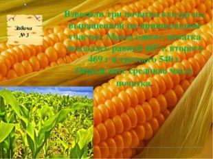 Взвесили три початка кукурузы, выращенной на пришкольном участке. Масса одног