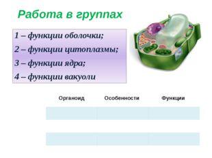 Работа в группах 1 – функции оболочки; 2 – функции цитоплазмы; 3 – функции яд
