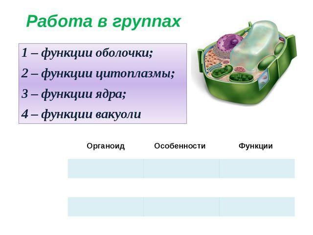 Работа в группах 1 – функции оболочки; 2 – функции цитоплазмы; 3 – функции яд...