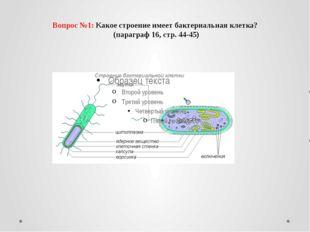 Вопрос №1: Какое строение имеет бактериальная клетка? (параграф 16, стр. 44-