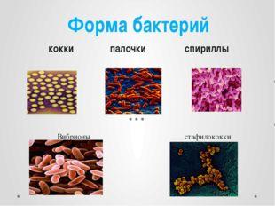 Вибрионы стафилококки Форма бактерий кокки палочки спириллы